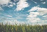 Resistentes Dextrin - Ballaststoffe - Resistente Stärke Typ 4 aus Mais ohne Gentechnik - 400 g